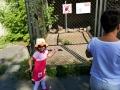 zoo 2016_08_19_110