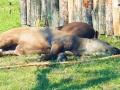 zoo 2016_08_19_170