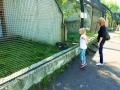zoo 2016_08_19_47