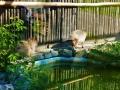 zoo 2016_08_19_50