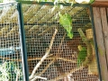 zoo 2016_08_19_8