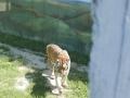 zoo_2018_05_30_39