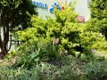 ogrod-2021-05-04_10