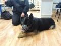 policja z psem_05_28_2015_46.JPG