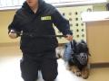 policja z psem_05_28_2015_7.JPG