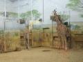wycieczka - zoo_10_20_2014119.JPG