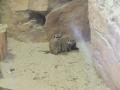 wycieczka - zoo_10_20_2014122.JPG