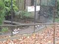 wycieczka - zoo_10_20_201431.JPG