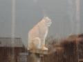 wycieczka - zoo_10_20_201442.JPG