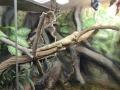 wycieczka - zoo_10_20_201468.JPG