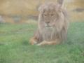 wycieczka - zoo_10_20_201487.JPG
