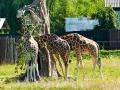 zoo 2016_08_19_156