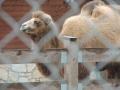 wycieczka - zoo_10_20_2014106.JPG