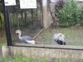 wycieczka - zoo_10_20_201438.JPG