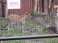 wycieczka - zoo_10_20_201452.JPG
