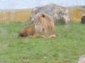 wycieczka - zoo_10_20_201493.JPG